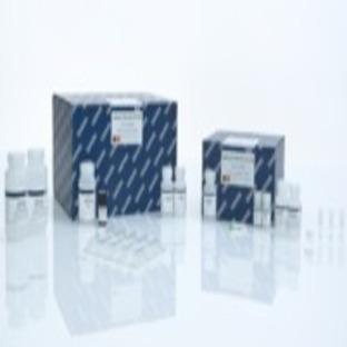 QIAamp DNA Mini Kit (50), 51304 from Qiagen - Labsave