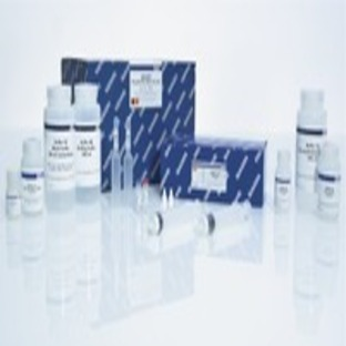 QIAGEN Plasmid Plus Mega Kit (5)