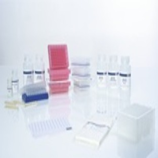 AllPrep DNA/RNA 96 Kit (4)